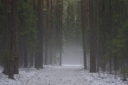 Landscape. The path through the spring forest during the active melting of snow with dense fog. 免版税图像