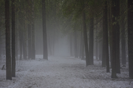 Landscape. The path through the spring forest during the active melting of snow with dense fog. 版權商用圖片