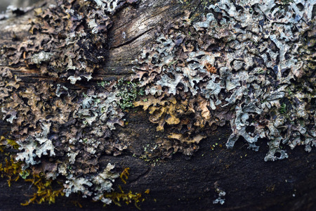Macrophotography. The old blackboard overgrown with moss and lichen.