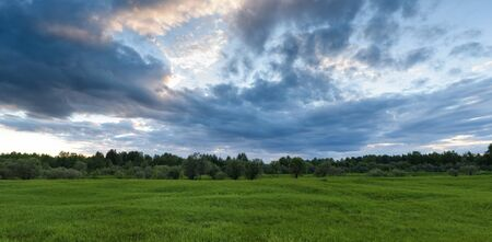 Dramatic sunset on the summer field with swaying in the wind grass, contrasting light and clouds in the sky.