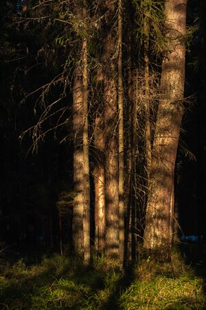 Landscape. Spring forest at sunset. The bright warm light of the sun creates contrasting dark shadows and bright highlights on the tree trunks. Most of the snow has already melted Archivio Fotografico