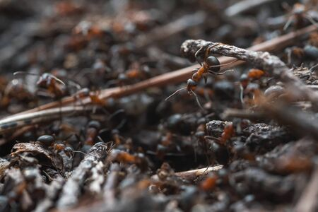 Forest workers ants in the daily bustle of everyday life.