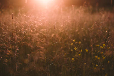 Field plants at sunset. The sun sets below the horizon creating contrasting combinations of herbs and plants. Stockfoto