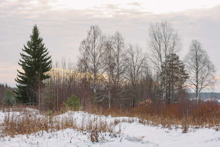 Trees of the northern forest covered with a layer of snow.