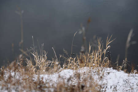 Field by the river in late autumn with dry grass and the first snow. Scenic view.