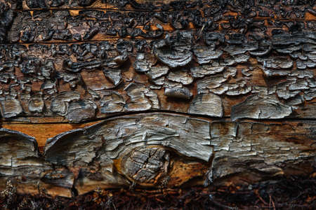 A fragment of old wood with a tarnished texture that has lost its color and the bark cracked from time close-up.
