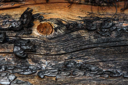 A fragment of old wood with a tarnished texture that has lost its color and the bark cracked from time close-up. Imagens