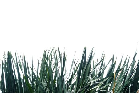 Tropical palm leaves with branches on white isolated background for green foliage backdrop Stok Fotoğraf