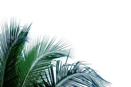 Coconut leaves with branches on white isolated background for green foliage backdrop Stok Fotoğraf