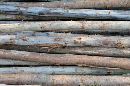 In selective focus a pile of woods with rough texture skin for texture background