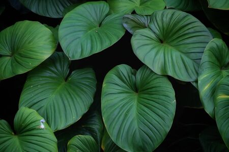 Tropical fern leaves growing in botanical garden with green color pattern and dark light background