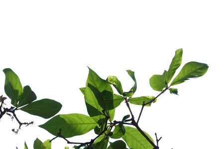 Bouchent les feuilles de plantes tropicales poussant sur un mur pour un fond de nature verdoyante