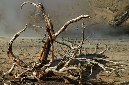 Decaying tree in harsh environment