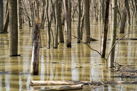 After the rain - flooded forest preserve