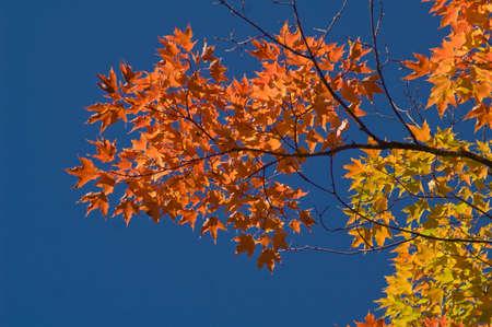 national forest: Ca�da en Chequamegon-Nicolet National Forest, Wisconsin, EE.UU.