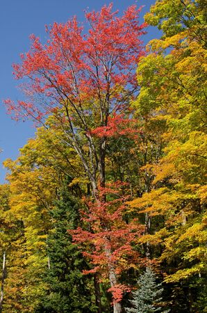 state of wisconsin: Beautiful autumn colors in Chequamegon-Nicolet National Forest, Wisconsin, USA