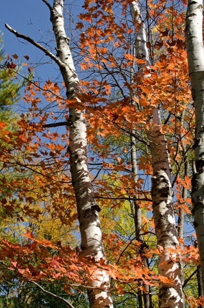 Beautiful autumn colors in Chequamegon-Nicolet National Forest, Wisconsin, USA