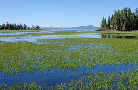 meanders: Pelican Creek meanders into Lake Yellowstone, Yellowstone National Park, Wyoming, USA