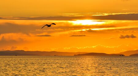 flying bird: Bird flying at sunset
