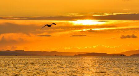 paloma de la paz: Pájaro de vuelo al atardecer Foto de archivo