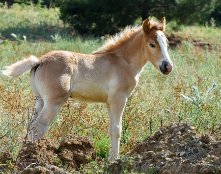 filly: Baby horse isolated. Filly standing on grass. Stock Photo