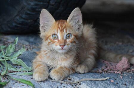 Baby cat looking at camera.