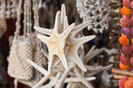 seastar: White starfish - sea-star in front of a store for sale. Stock Photo