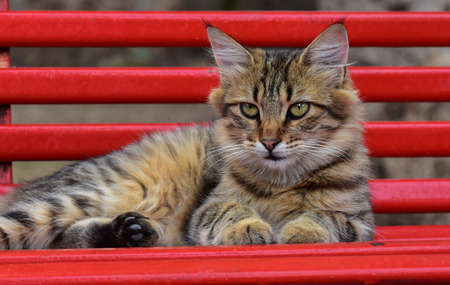 pete: Cat lying on a red bench and looking at the camera.