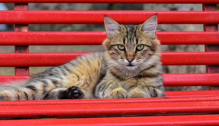 Cat lying on a red bench and looking at the camera.