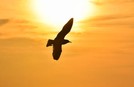 Sun between clouds and a seagull flying in silhouette. Stock Photo