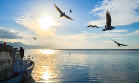 winger: Seagulls flying over a cloudy, blue, cloudy sky. There is a fishing boat on the sea. Stock Photo