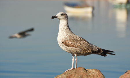 Seagull standing on a rock near the sea.