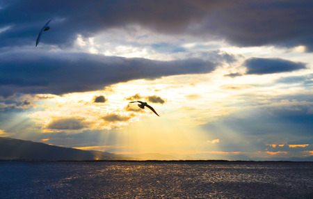 winger: Bird flying on the sea at sunset, in silhouette. Sun between clouds and seagulls flying.