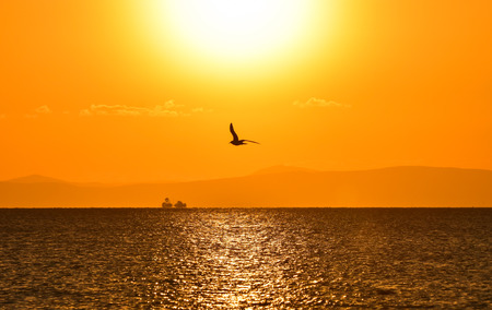 winger: Seagull flying on the sea at sunset, in silhouette. Stock Photo