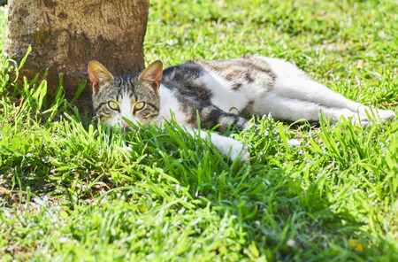 pete: Young cat lie down on green grass under a tree. Stock Photo