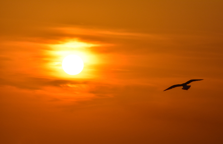 Seagull flying at sunset sky, silhouette. Sun between clouds, a seagull flying.