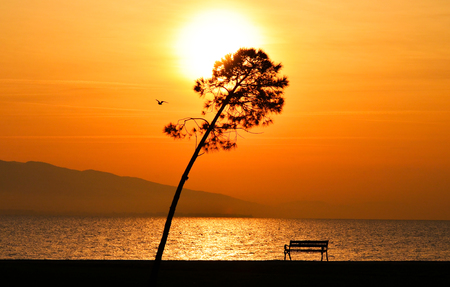 Sunset on the sea. Sun between clouds and there is a tree, a bench and a flying bird in view, silhouette.