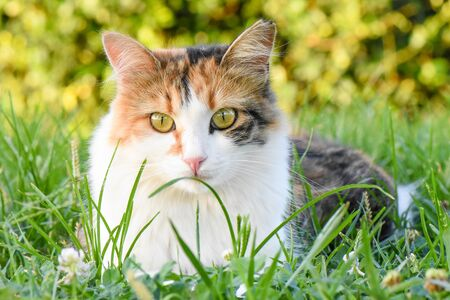 Beautiful cat with green eyes sitting on grass