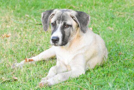 a street dog sitting on green grass Standard-Bild