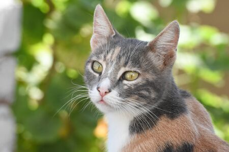 portrait of a cat in front of green background.