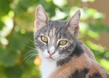 portrait of a cat, cat looking at camera