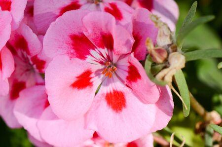 Beautiful pink flower in a garden