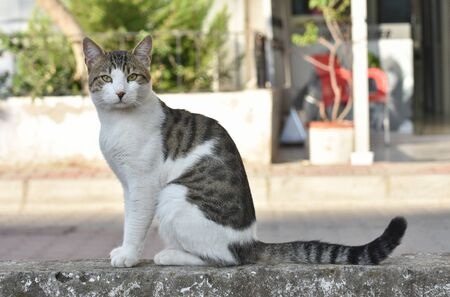 Street cat sitting on a wall and looking at camera.