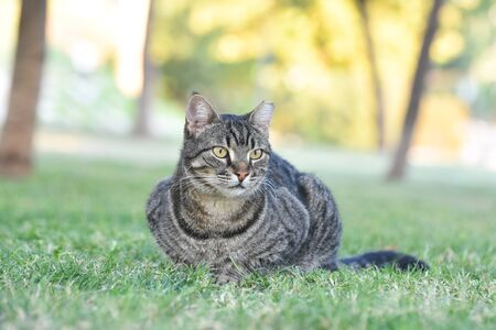 Cat sitting on green grass in a park.