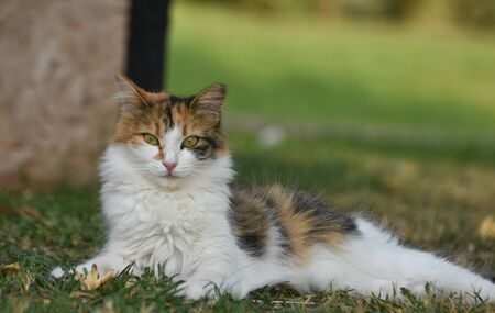 Beautiful cat with green eyes sitting on grass and looking at camera. Standard-Bild