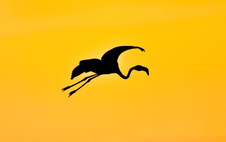 Silhouette of a flamingo flying with open wings