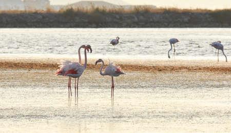 Flamingo family on a coast