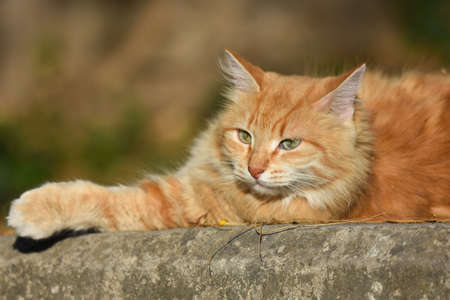 Yellow cat sitting an a wall