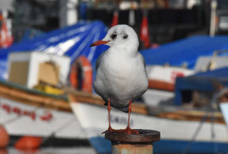 Seagull standing on a iron