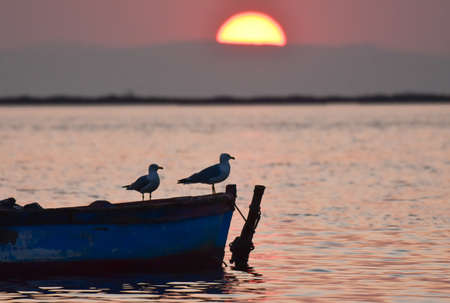 Seagull standing on a boat at sunset Standard-Bild